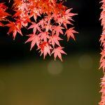 神奈川 紅葉 湖